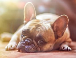 Calming A Dog, Tips to Relax!