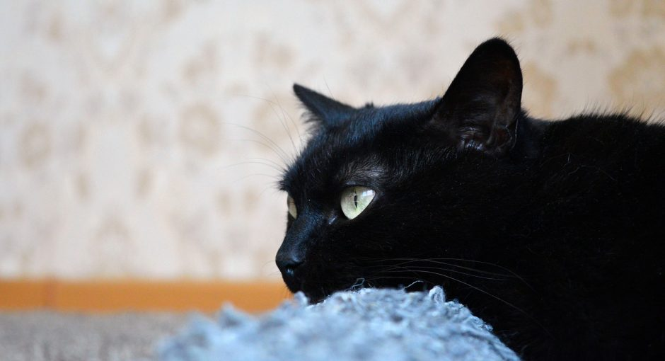 Feline Skin Conditions to Watch For with Your Cat