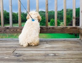 How To Stop Dog Pulling On The Lead