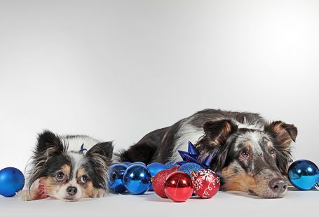 New Year's Resolutions Your Dog Needs You To Make