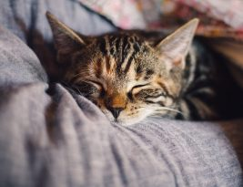 Cat Care – Taking the Right Steps For Your Cat's Health