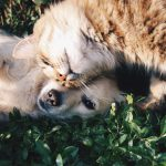 Good Cat Care - A Brief Guide To Feeding Your Cat